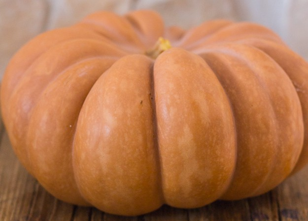 pumpkins in Italy