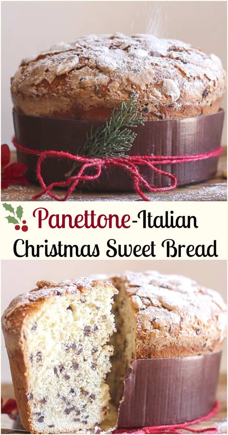 Panettone, an Italian Christmas Sweet Bread a not too sweet yeast bread, filled with raisins, candied fruit or Chocolate Chips. A delicious way to celebrate the Holidays. #panettone #ItalianChristmascake #cake #sweetbread #chocolate #yeastbread #Christmas #Christmascake #Italiansweetcake #Italianrecipe #dessert #brunch