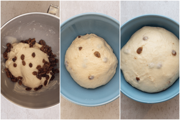 making the dough before and after rising with white grape must